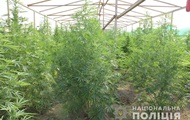 На Закарпатье обнаружили плантацию марихуаны