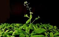 У растений имеется аналог нервной системы – ученые - Real estate