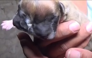 В Сети показали двухголового щенка-мутанта