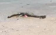 В Сети раскрыли тайну с останками  морского чудовища