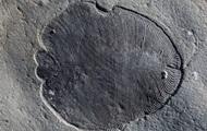 Ученые нашли останки древнейшего существа на Земле