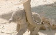 В калифорнийском зоопарке родился слоненок