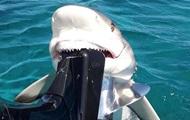 Акула вцепилась в мотор лодки, напугав рыбака