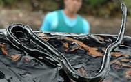 В водах Австралии впервые от укуса морской змеи умер мужчина