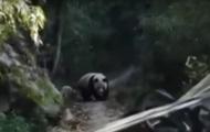 В Китае панда напугала лошадь