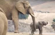 В зоопарке США родились два слоненка