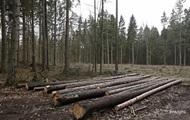 Названы покупатели контрабандного леса из Украины