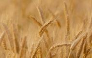 В Украине ожидается второй в истории урожай зерновых - Мартынюк