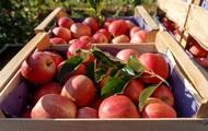 Украина нарастила экспорт плодов и ягод