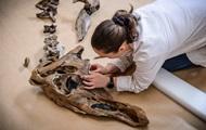 В Китае на стройке случайно нашли кости динозавров