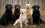 Собаки могут определять больных малярией по запаху носков