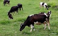 Украина удвоила ввоз чистопородного племенного скота - Минагрополитики