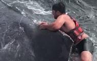 Рыбак спас кита, прыгнув на него с ножом в зубах