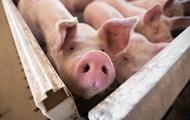 Украина в четыре раза увеличила импорт свинины