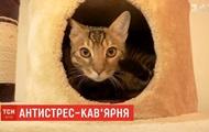 В Днепре открыли антистресс-кофейню с котами