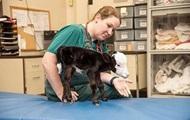 В США родился аномальный теленок размером с кошку