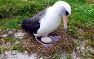 Самая старая птица в мире снесла яйцо