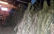 В Черниговской области полиция изъяла центнер конопли