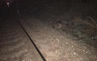 Под Запорожьем поезд насмерть сбил пенсионерку