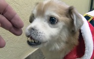 Аномальная собака без носа стала интернет-звездой
