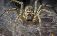 Кричащий на паука австралиец шокировал соседей