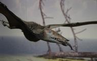 В Великобритании нашли неизвестный вид летающего динозавра