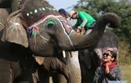 В Непале провели конкурс красоты для слонов