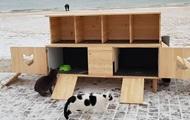 """В Одессе построили """"котопункт"""" для бездомных котов"""