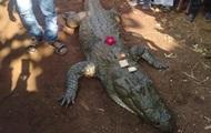 Хоронить 130-летнего крокодила пришли 500 человек