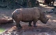 Ребенок чудом выжил в клетке с носорогами