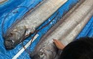 В Японии на берег выбросилась самая длинная в мире рыба