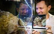 У рыб обнаружили признаки сознания