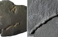 В Габоне обнаружили останки древнейших многоклеточных существ