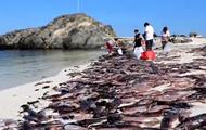 Тысячи мертвых каракатиц засыпали популярный пляж