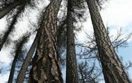 У Житомирській області знайшли прив'язаний до дерева труп