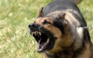 В Николаевской области пес загрыз насмерть молодую девушку