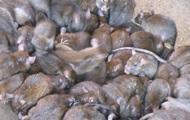 В Сумской области обнаружили опасную инфекцию