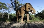 В Таиланде игривый слон