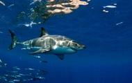 Ученые выяснили, где людей чаще атакуют акулы