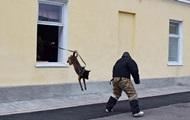 Пограничники показали, как готовят собак в спецназ