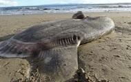 В США на пляж выбросило странную гигантскую рыбу