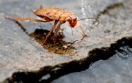 Из уха 17-летней девушки достали живого таракана