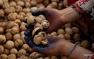 Украина рекордно экспортировала орехи и фрукты