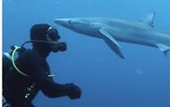 В ЮАР акула