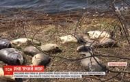 В Кировоградской области из-за свиней массово гибнет рыба - СМИ