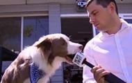 Собака испортила интервью,