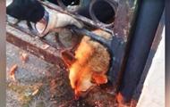 В Павлограде спасатели достали собаку из ограды