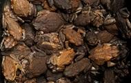 Тысячи ядовитых жаб