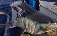 Австралийский рыбак выловил гигантскую голову мертвой акулы