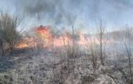 Под Ужгородом горело 35 гектаров леса
